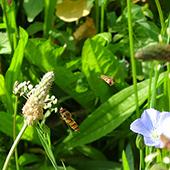 hetre-jardin-ecologique-respect-ecosysteme