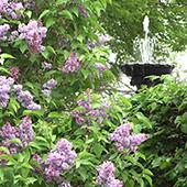 hêtre - jardin de soin : Un lieu de liberté qui n'évoque pas le milieu médical. C'est l'occasion d'être fier de son lieu de vie.