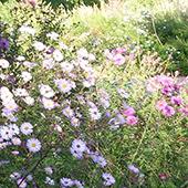 hêtre - jardin de soin : un lieu sûr, les patients se promènent librement, en toute sécurité. Absence de plantes toxiques, allergisantes, piquantes.
