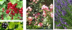 UVP-jardin-sensoriel-allée