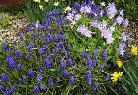 Using blue in the garden. Jardin