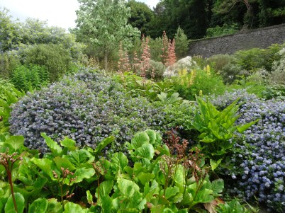 How to use Blue in the garden