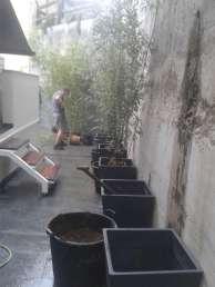 jardinería-decoracion-20140604_111646