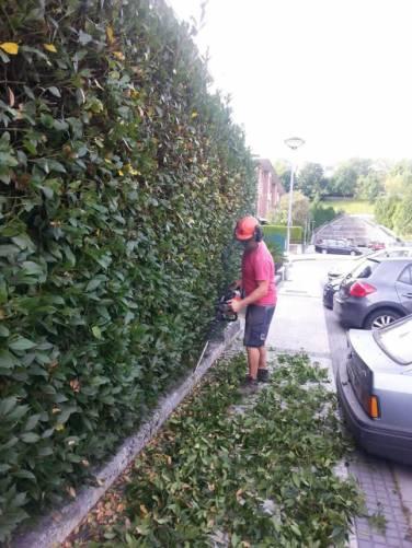 mantenimiento-jardin-donostia-IMG-20140819-WA0005