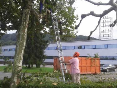 mantenimiento-jardin-empresa-20141010_180125