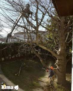 Abattage d'arbre a Hendaye