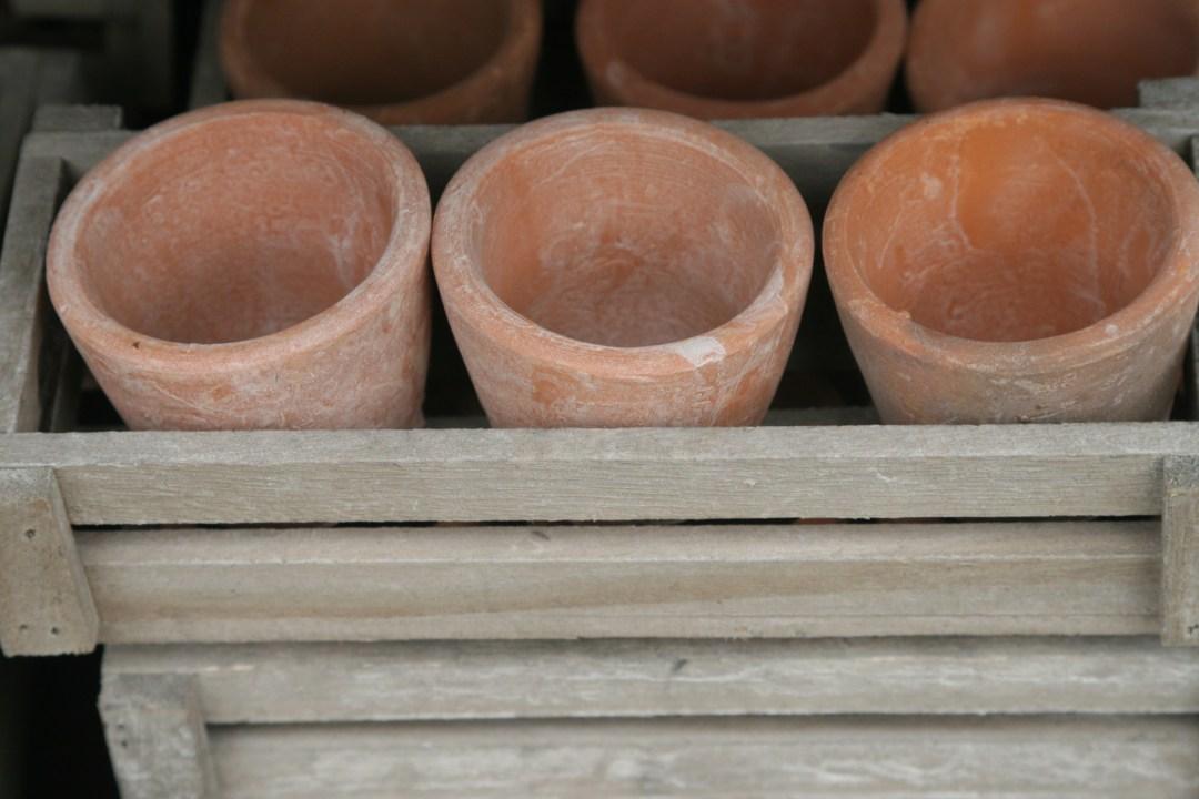 jardinerie perigny garden vente plante fleur jardin - 94 val de marne (127)