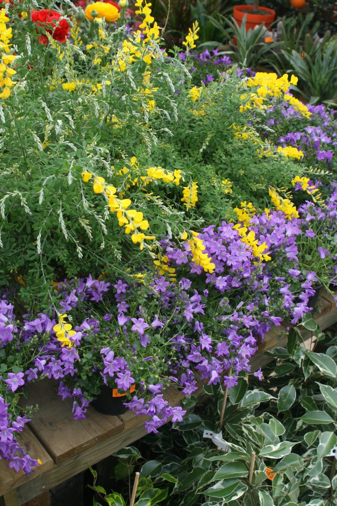 jardinerie perigny garden vente plante fleur jardin - 94 val de marne (25)