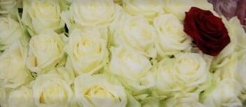 perigny-garden-creation de bouquet - fleuriste val de marne (169)
