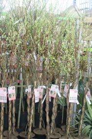 Arbuste Jardinerie Perigny Garden