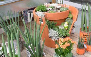 plantes d interieur jardinerie de l ill