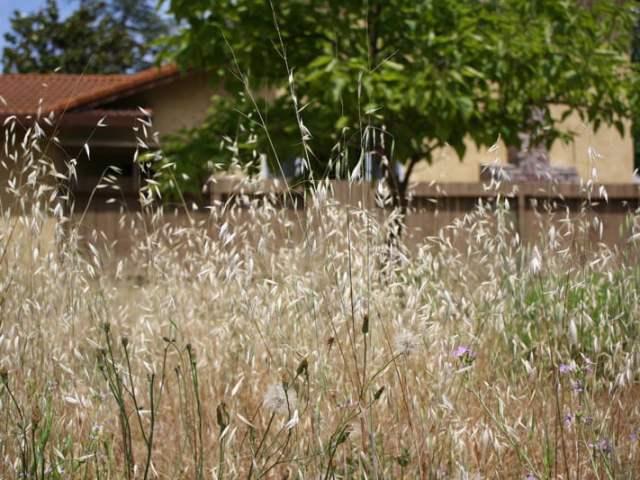 Un jardín como actividad terapéutica