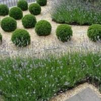 Apuntes sobre diseño de jardines