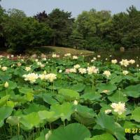 Las plantas acuáticas y su cultivo