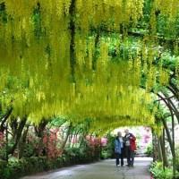 Visita de jardines en Inglaterra.-Londres