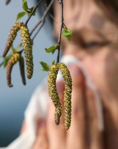 Knackiger Winter für Pollenallergiker ideal