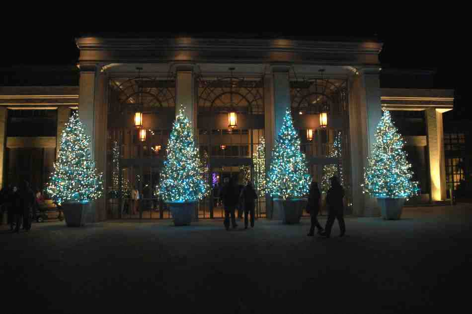 Arbres de Noël à l'entrée de la serre de l'est