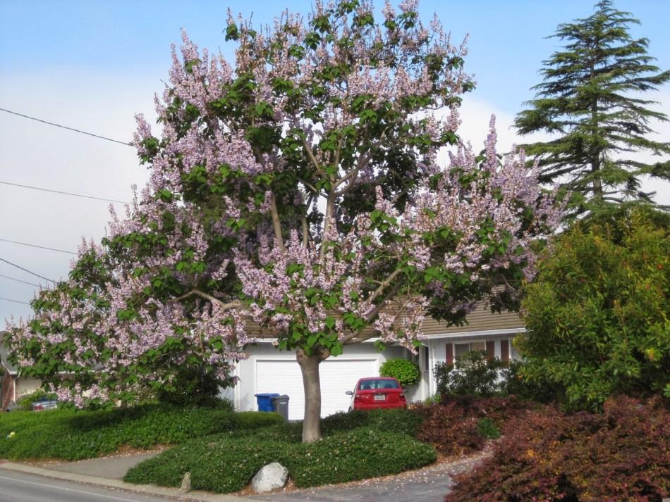 20180406B treesofsantacruzcounty.blogspot.ca.JPG