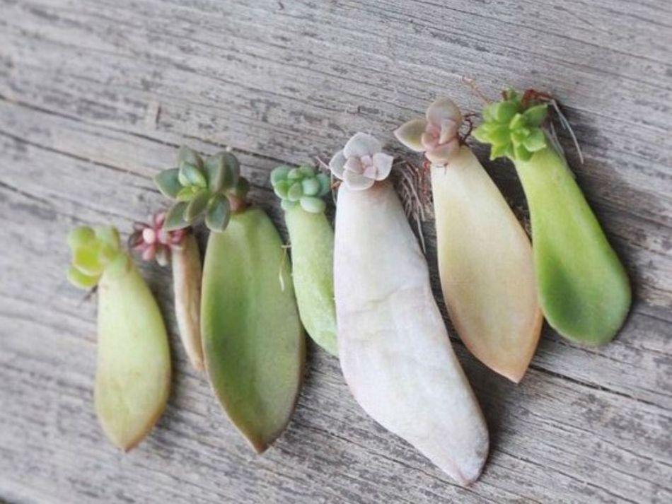 20180410Z worldofsucculents.com.jpg