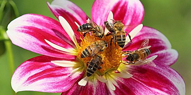 20190113U honeybeesuite.com.jpg