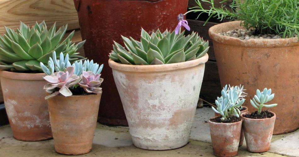 Pots de terre cuite avec des marques blanches.