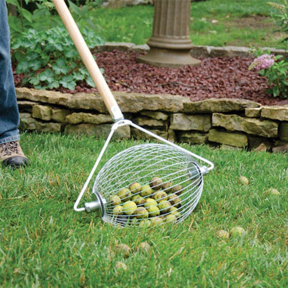 Ramasse-noix avec noix vertes à l'intérieur