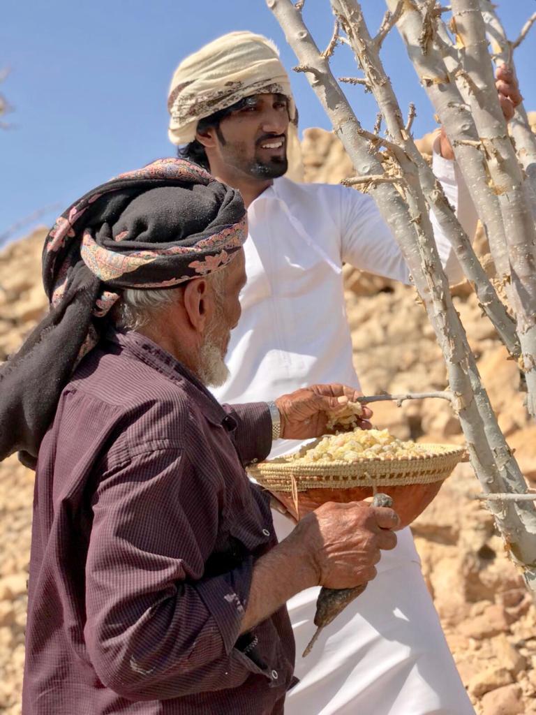 Deux hommes en costume arabe qui récolte de l'encens sur un arbre.