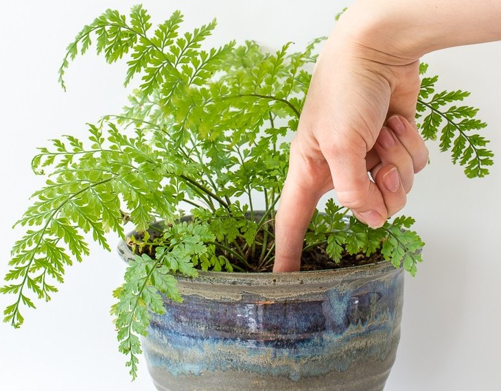 Doigt qui mesure l'humidité dans un pot