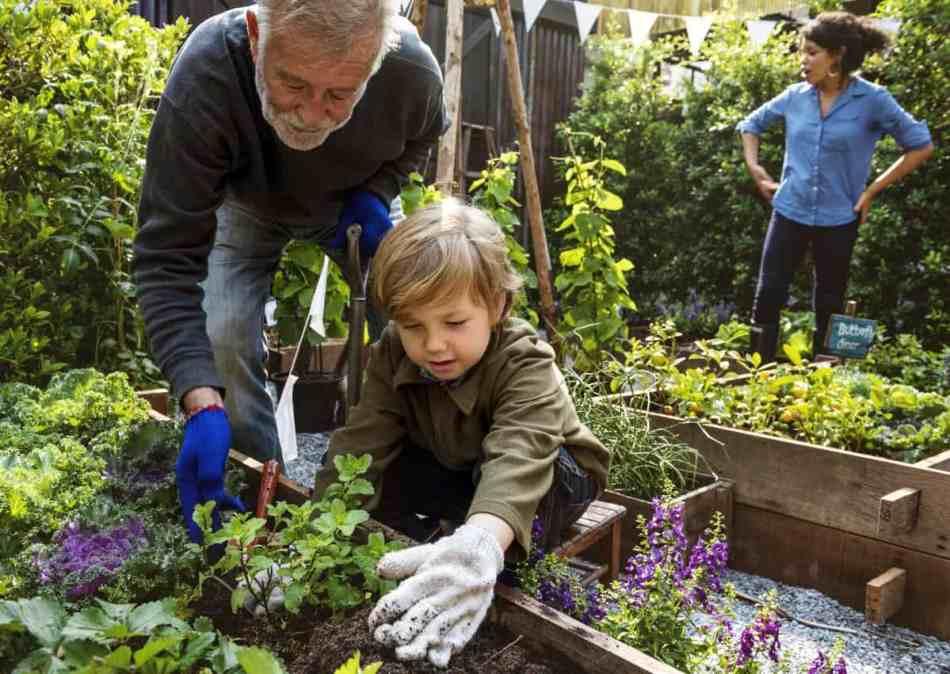 Garçon qui jardine avec l'aide de son grand-père; une femme regarde au loin