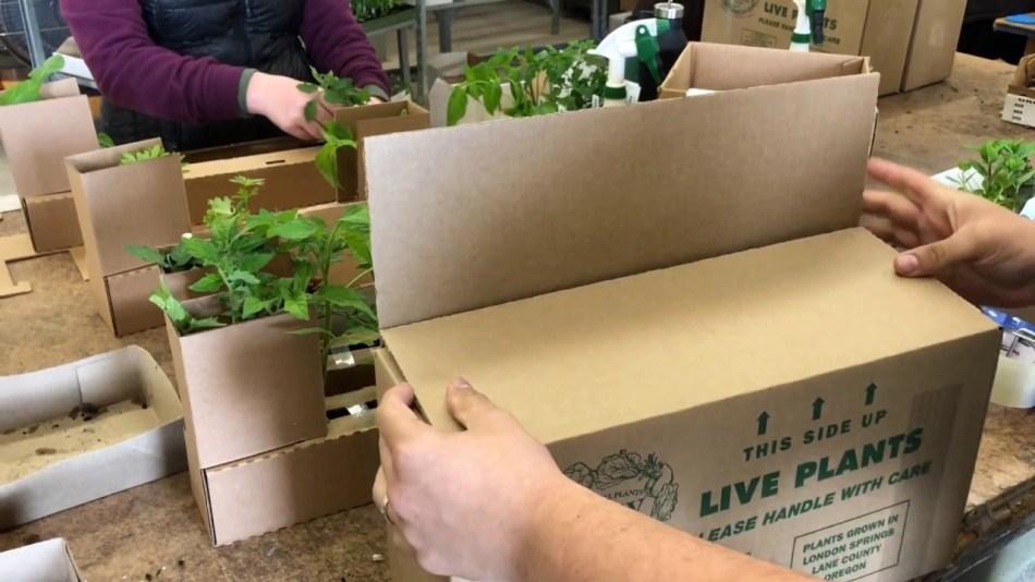 Plantes emballées pour un envoi postal.
