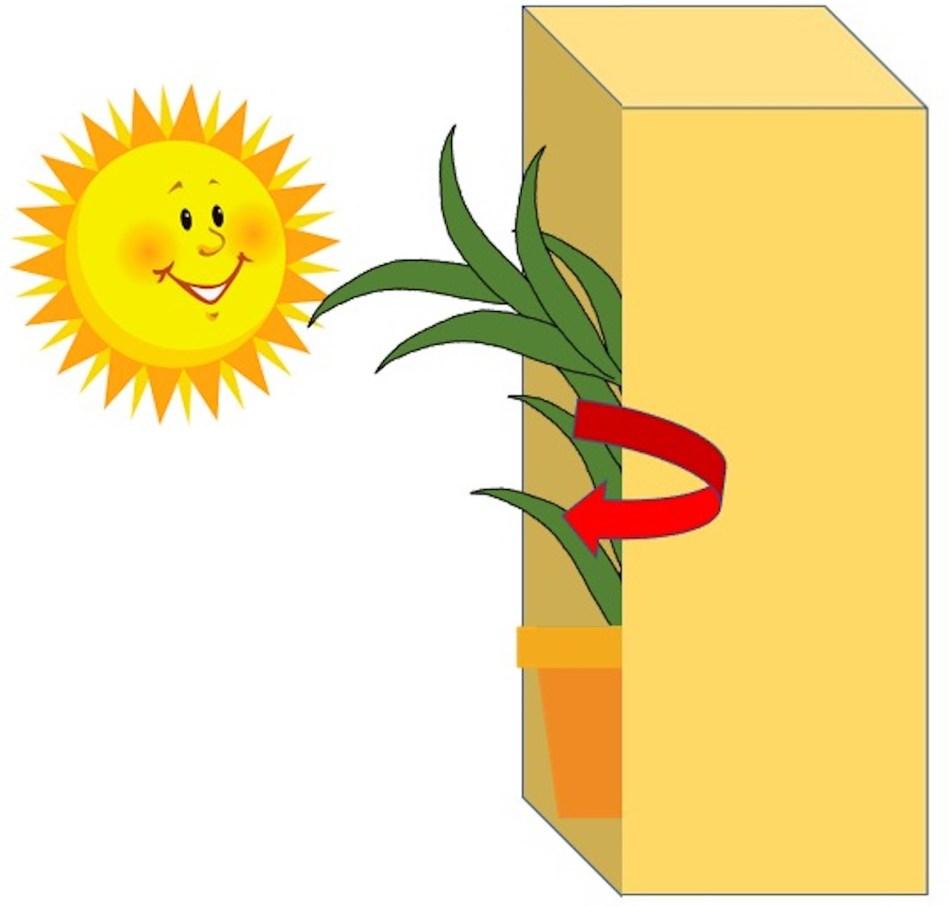 Dessin de lucky bambou dans une boîte, maintenant avec une flèche en spirale le montrant en rotation.