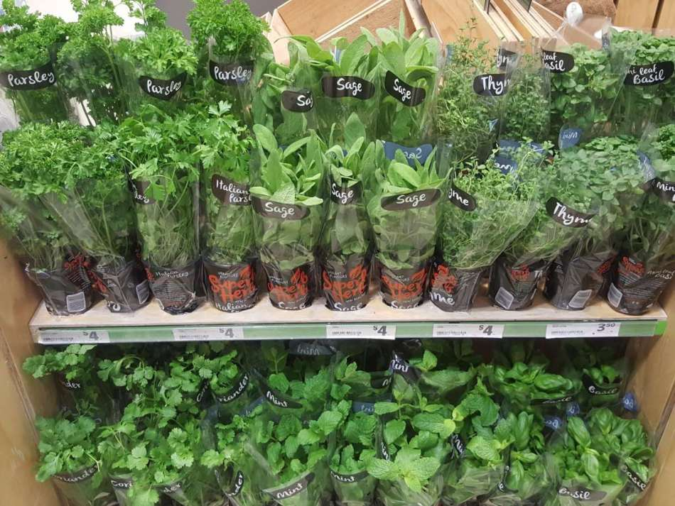 Pots de fines herbes diverses sur une tablette de supermarché.