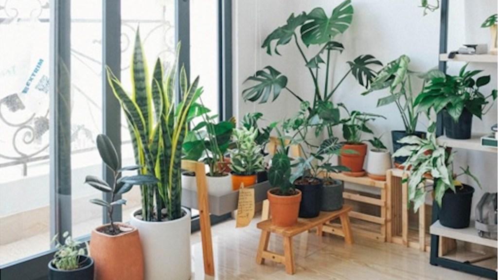 Pièce remplie de plantes d'intérieur.