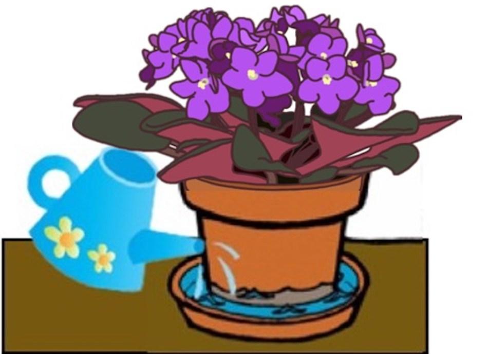 Illustration d'une violette africaine trempant dans une soucoupe d'eau, arrosoir bleu verse de l'eau.