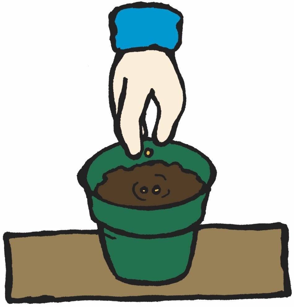 Main plaçant 3 graines dans un trou au centre d'un pot vert.
