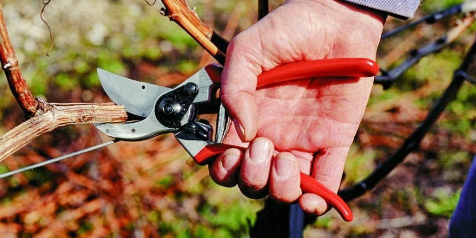 Sécateur qui coupe une branche.