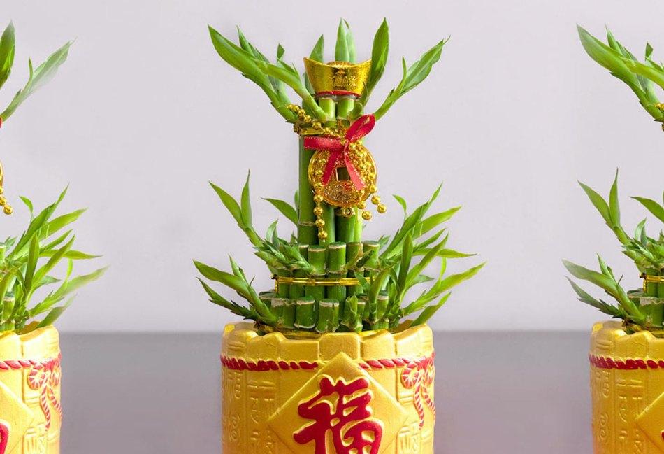 Lucky bambou en pot jaune avec lettres chinoises rouges et attaches et médaillons en or, plus une boucle rouge.