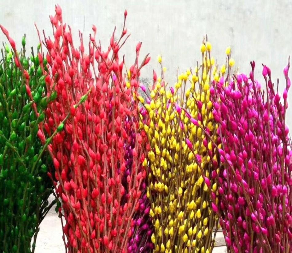 Branches de saule teintes de couleurs vives.