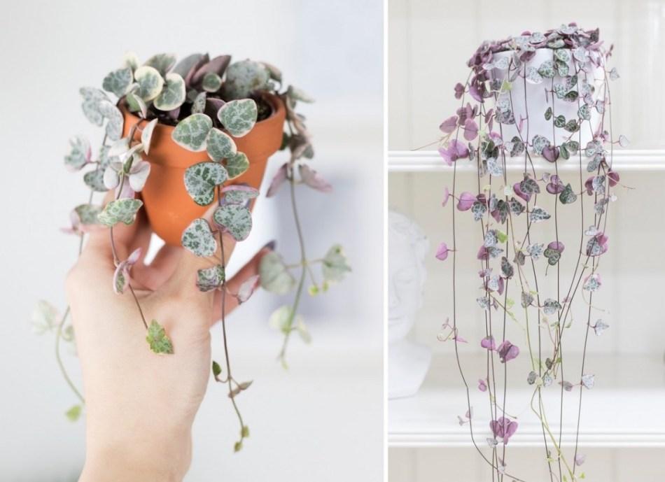 Deux photos de chaînes de cœurs panachées