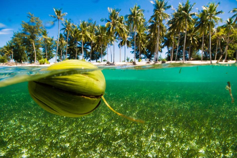 Noix de coco qui flotte devant un île tropicale.