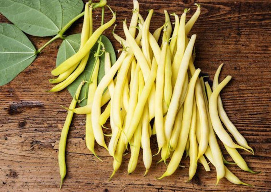 Haricots beurre jaune vif.