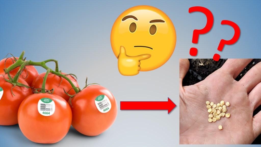 Tomate de supermarché avec émoji montrant le doute, puis main tenant des semences de tomatel