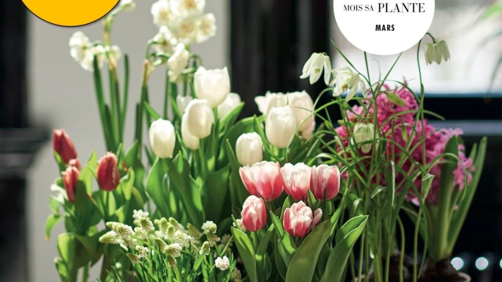 Plusieurs pots de bulbe aux fleurs de couleurs différentes.