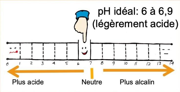 Échelle de pH montrant le pH idéal.