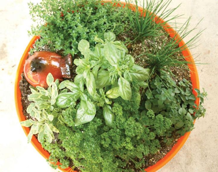 Jardin de fines herbes en pot avec du persil