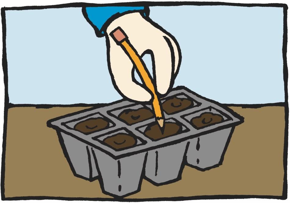 Illustration montrant une main faisant un trou avec un crayon dans le terreau d'un plateau multicellule.