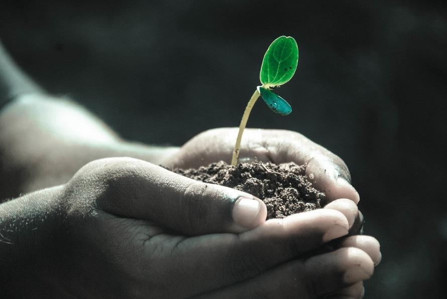 Main tenant un semis dans sa paume.