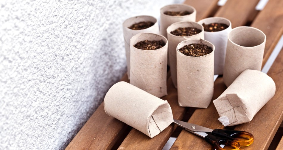 Tubes de papier toilette convertis en pots pour semis.
