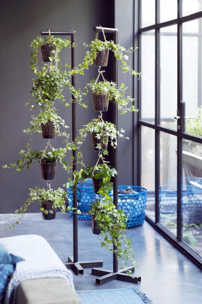 Paniers suspendus de lierre sur deux supports devant une grande fenêtre.