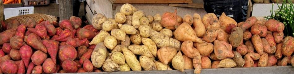 Tubercules de patate de différentes couleurs.